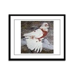Pageant Champion Pigeon Framed Panel Print