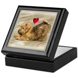 Norfolk Terrier Puppy Love Keepsake Box