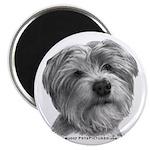 Biscuit, Shih Tzu-Terrier Magnet