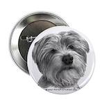Biscuit, Shih Tzu-Terrier 2.25