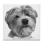 Biscuit, Shih Tzu-Terrier Tile Coaster