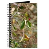 Berry Journal