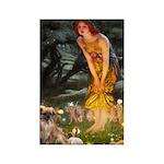 Fairies / Tibetan Spaniel Rectangle Magnet (10 pac
