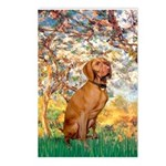 Spring / Vizsla Postcards (Package of 8)