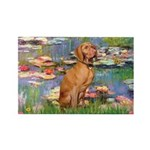 Lilies / Vizsla Rectangle Magnet