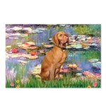 Lilies / Vizsla Postcards (Package of 8)