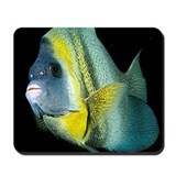Cortez Angel Fish Mousepad