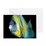 Cortez Angel Fish Greeting Card