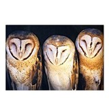 Cute Fearful owl Postcards (Package of 8)