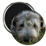 Irish Wolfhound Thinking Magnet