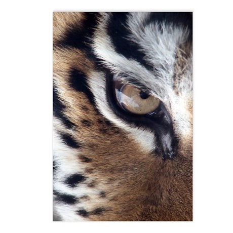 Tiger Eye Postcards (Package of 8)