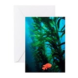 Kelp Scene Greeting Cards (Pk of 10)