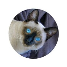 "3.5"" Button - Sam, the Siamese cat"
