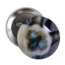 "2.25"" Button - Sam, the Siamese cat"