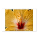 Hibiscus Postcards (Package of 8)