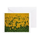 Sunflowers Greeting Cards (Pk of 20)