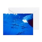 Spinner Dolphins Greeting Cards (Pk of 10)