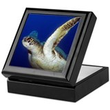 Flying Sea Turtle Keepsake Box