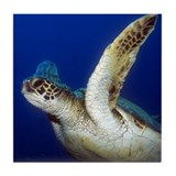 Flying Sea Turtle Tile Coaster