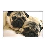 Pug Postcards