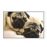 Pug Postcards