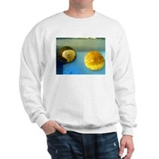 Sand Dollar Sweatshirt