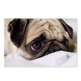 Miss You Pug Postcards - Pack of 8 (blank)