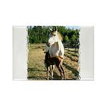 BEAUTIFUL HORSES Rectangle Magnet (100 pack)