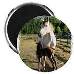 BEAUTIFUL HORSES Magnet
