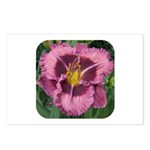Macbeth Daylily Postcards (Package of 8)