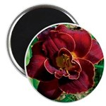 Night Embers Daylily Magnet
