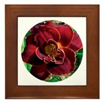 Night Embers Daylily Framed Tile