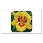 Fooled Me Daylily Rectangle Sticker