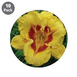 Fooled Me Daylily 3.5