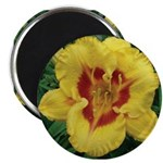 Fooled Me Daylily Magnet