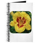Fooled Me Daylily Journal