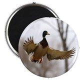 "Morning Flight 2.25"" Magnet (10 pack)"