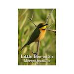 Little Bee-eater Rectangle Magnet