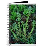 Oregano Journal