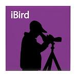 iBird (purple) Tile Coaster