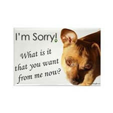 Funny I'm Sorry Chihuahua Rectangle Magnet