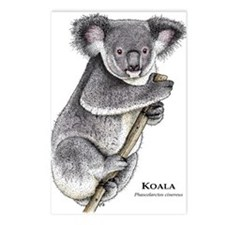 Koala Postcards (Package of 8)