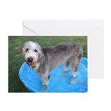 Nyah Sheepdog in Pool Greeting Card