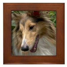 Sheltie Face Framed Tile
