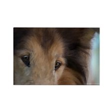 Rough Collie Art Rectangle Magnet (10 pack)