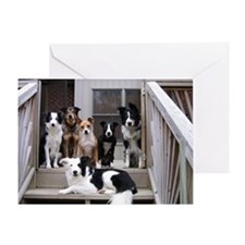 Funny Flyball dog Greeting Card