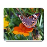 Butterfly (Buckeye) on Orange Coreopsis Mousepad
