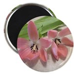 "Pink Tulips In Bloom 2.25"" Magnet (100 pack)"