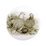 Frillback Pigeons 3.5