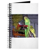 Solomon Parakeet Journal